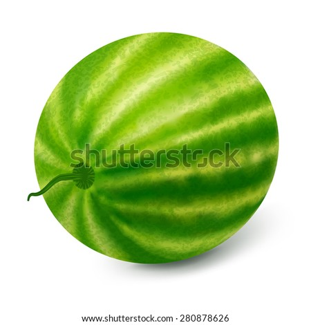 Ripe watermelon on a white background.Vector illustration. - stock vector