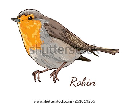 Robin-redbreast Stock Photos, Royalty-Free Images ...