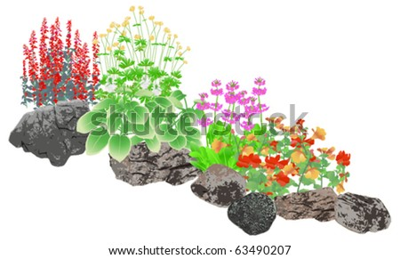 Rockery, Rock pool edging plants - stock vector