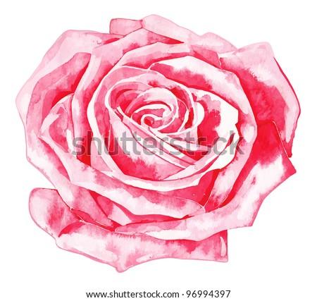 romantic, rose, r rose - stock vector
