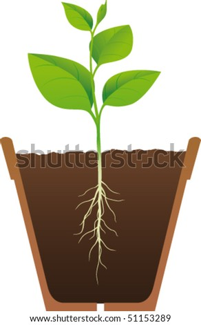 Rooted plants in pots - stock vector