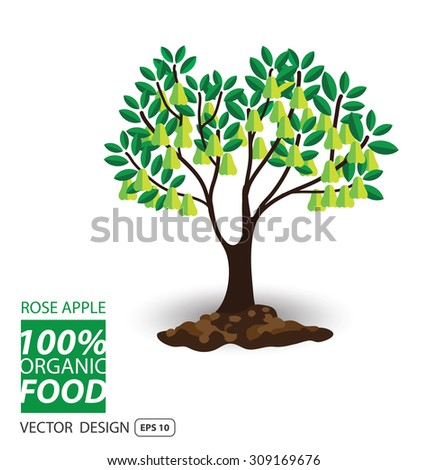 rose apple, fruits vector illustration. - stock vector