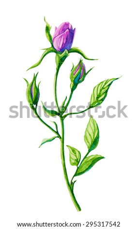 Rose bud watercolor vector drawing. - stock vector