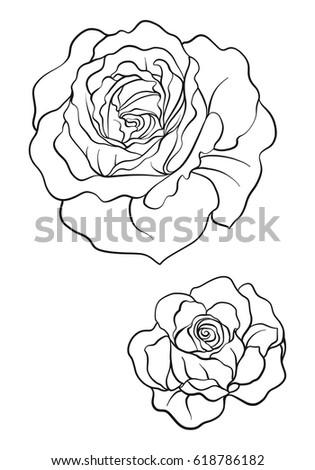 Rose Flower Illustration In Botanical Style Stock Vector