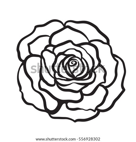 Rose Outline Vector Stock Images Royalty Free Images Vectors