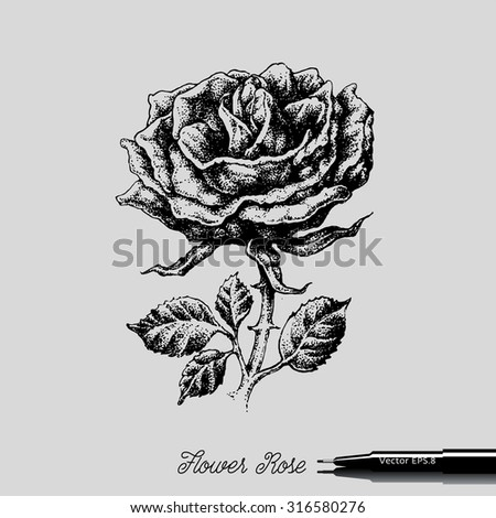 Rose Flower style of engraving. Hand drawn. eps8.