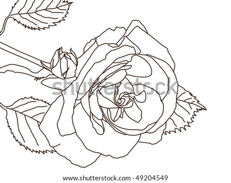 rose traced on white background