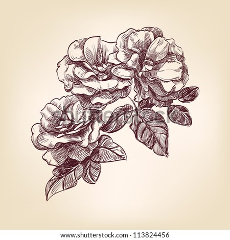 roses hand drawn vector llustration realistic sketch - stock vector