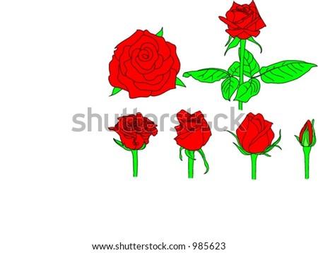roses vector - stock vector