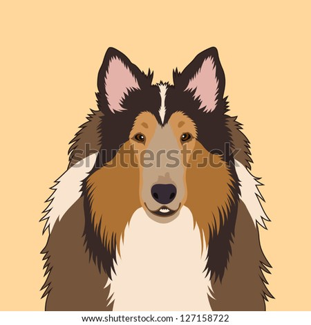 Rough Collie, The buddy dog - stock vector