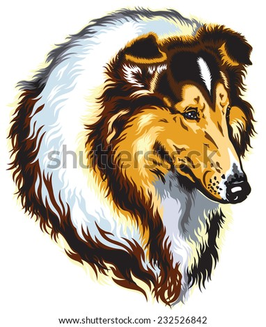 rough or long-haired collie dog head. Image isolated on white - stock vector