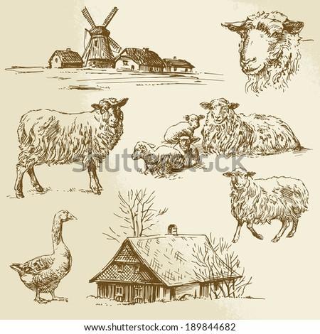 rural landscape, farm animal - hand drawn illustration - stock vector