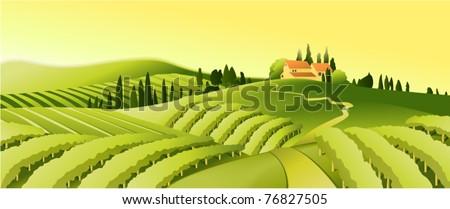 Rural landscape with vineyard - stock vector