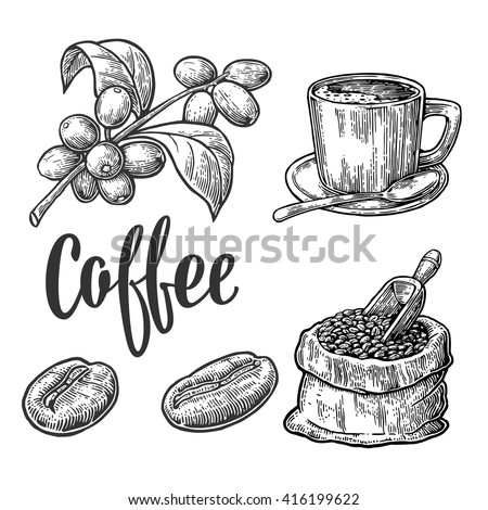Coffee drawing stock images royalty free images vectors for How to draw a coffee bean