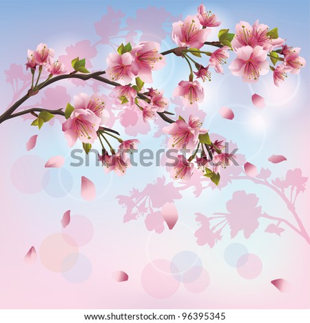 Sakura blossom - Japanese cherry tree background, greeting or invitation card - stock vector