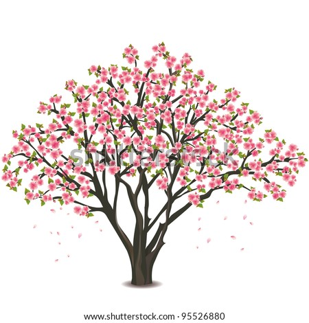 Sakura blossom - Japanese cherry tree, with falling petals isolated on white background - stock vector