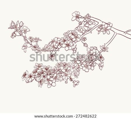 sakura flowers drawing  - stock vector