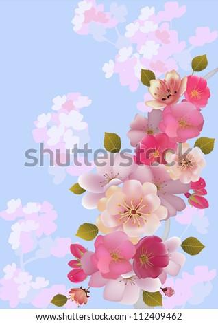 sakura . postcard . menu. - stock vector