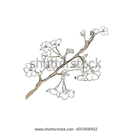 Sakura tree branch sketch cherry blossom vector outline