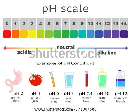 scale of ph value for acid and alkaline solutions, infographic acid-base balance. scale for chemical analysis acid base. Examples of pH conditions, vector illustration isolated or white background