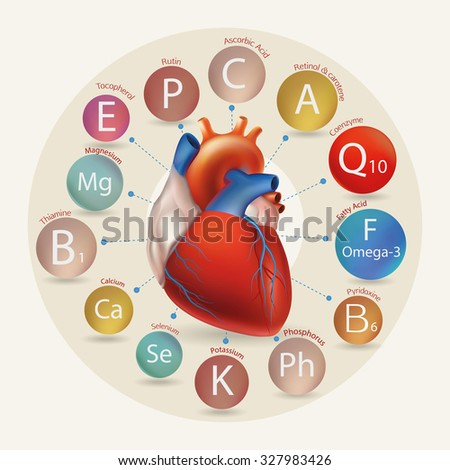 Schematic representation of the heart and the basic substances required for normal cardiac activity. Basics of a healthy lifestyle. - stock vector