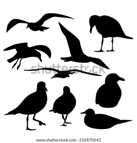 Sea Gull Silhouette, Vector