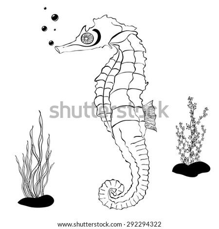 Sea Horse Color Book Stock Vector HD (Royalty Free) 292294322 ...