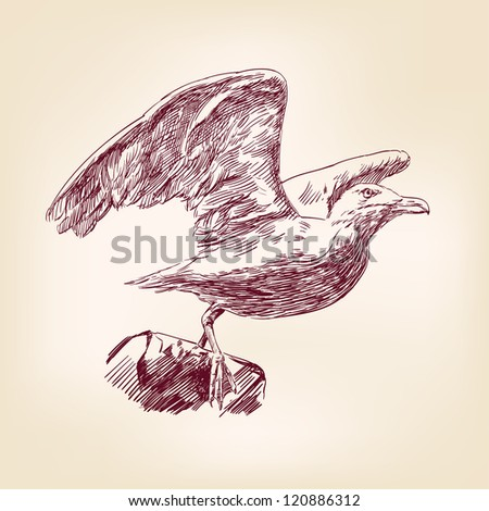 seagull hand drawn vector llustration realistic sketch
