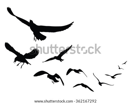 seagull silhouette on white background, Vector Illustration - stock vector