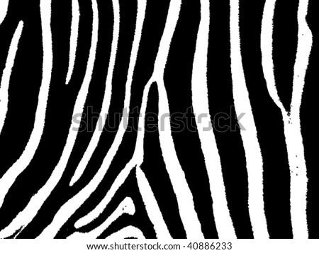 seamless animal pattern skin fur vector zebra - XXL version in jpeg available in my portfolio - stock vector