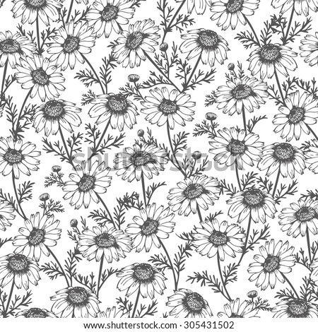 Seamless background from hand drawn chamomile, vector flower pattern