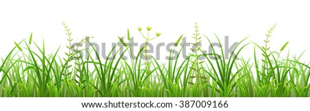 Seamless green grass pattern on white background - stock vector