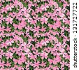 Seamless pattern of pink small flowers. Flower glade. Vector illustration. - stock vector