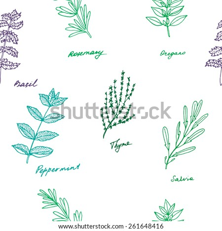 Seamless pattern of some provence herbs: basil, rosemary, oregano, thyme, peppermint, salvia - stock vector