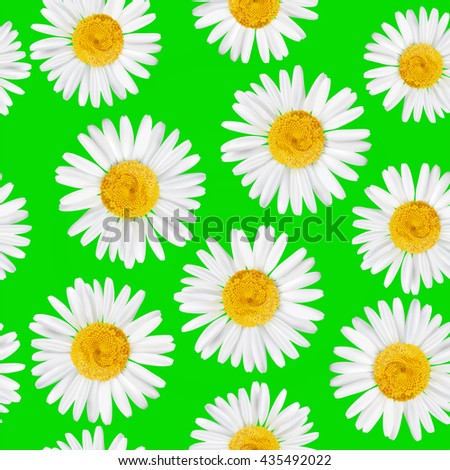 Seamless pattern with daisy, chamomile flowers. Vector natural illustration. EPS10. - stock vector