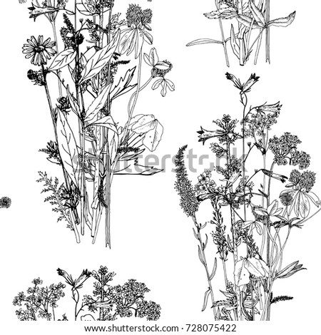 Seamless pattern with drawing wild plants, herbs and flowers, monochrome botanical illustration in vintage style, vector floral background