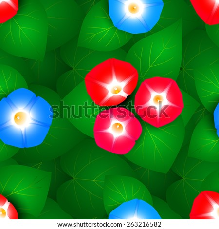 Seamless pattern with flowers ipomoea morning glory. - stock vector