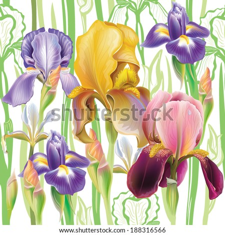 Seamless pattern with Iris flowers - stock vector