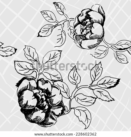 Seamless vector background with vintage roses isolated. Hand drawn rose. Sketch of roses. Flowers