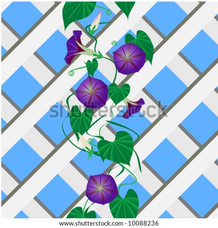 Seamless vector in any direction. Morning glory plant, vining over white wooden trellis. - stock vector