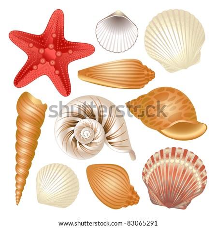 Seashells collection - stock vector