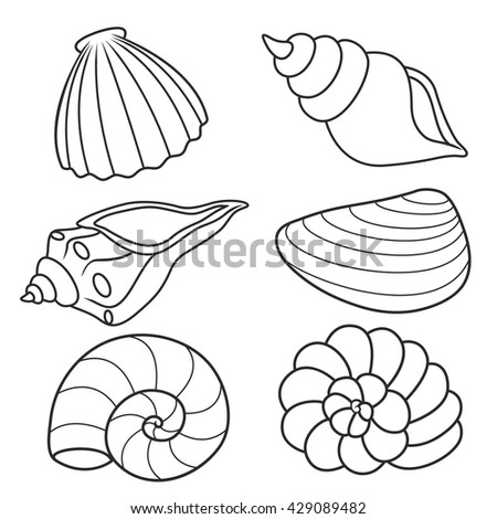 Vector illustration sea shells stock vector 202319962 for Coloring pages of seashells