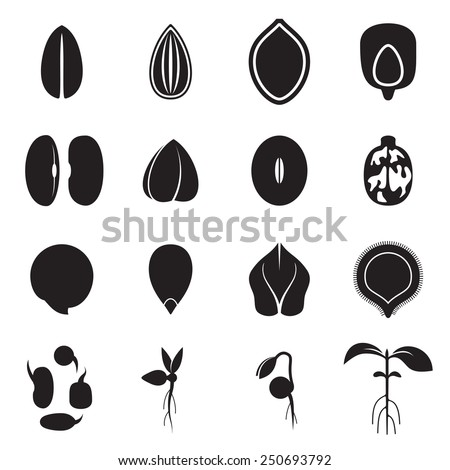 Seed icon set, which represents the most common types of crop seeds such as beans, buckwheat, wheat, sunflower, pumpkin, castor, soy etc. and germination of seeds and sprouts. Vector illustration - stock vector