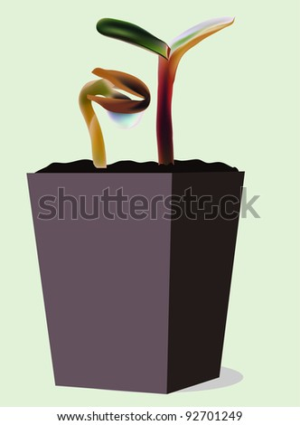 seedling in a pot - stock vector