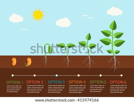 Seedlings growing infographics with plants grow stages, vector illustration - stock vector