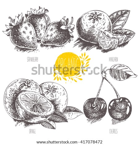 Series - vector fruit, vegetables and spices. Hand-drawn illustration in vintage style. Sketch. Healthy food. Linear graphic. Set of  strawberry, cherry, mandarin, orange. - stock vector