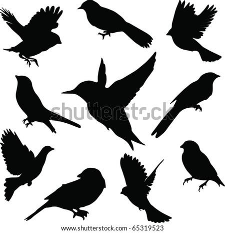 Set Birds.Vector - stock vector