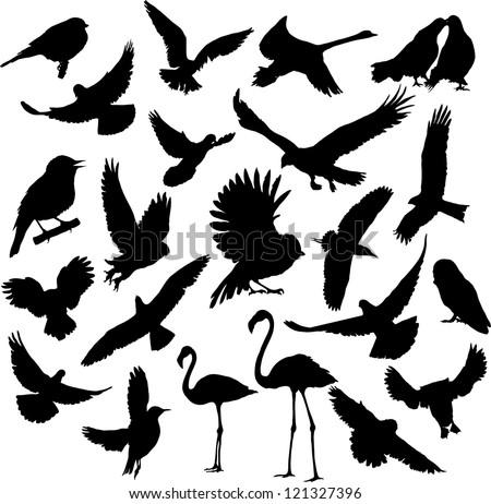 Set Birds.Vector illustration - stock vector