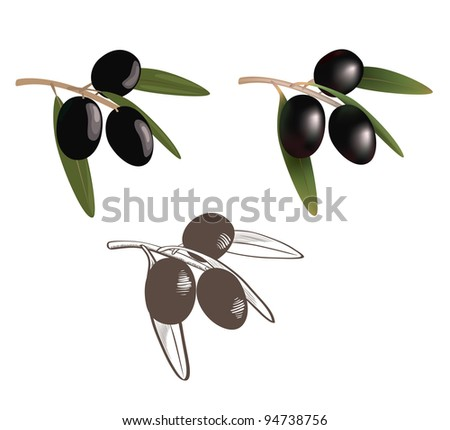 Set collection three styles of black olives with leaves. vector illustration.