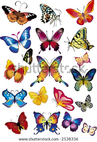 set different multicolored butterflies -  vector